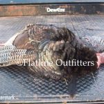 turkey hunting oklahoma