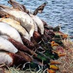 waterfowl and duck hunt in oklahoma