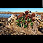 waterfowl and duck hunts